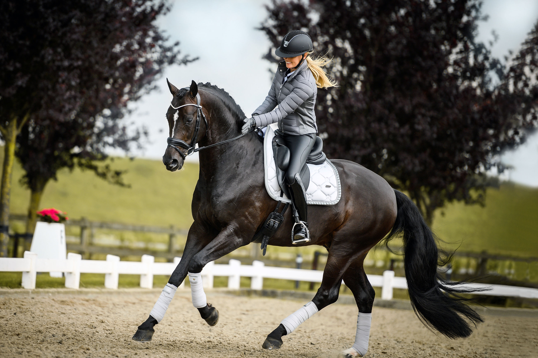 silver-cloud-halter-equestrian-stockholm-2-2.jpg